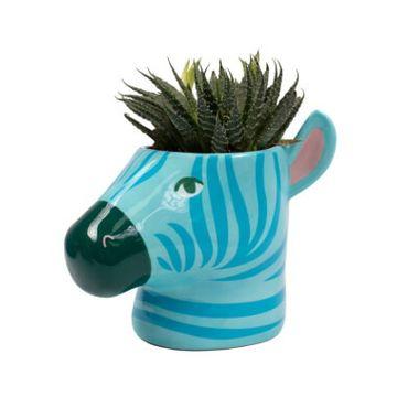 Zebra Plant Pot
