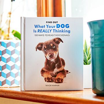 What Your Dog Is Really Thinking