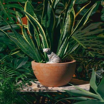 Jangal Tiger Self-Watering System