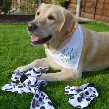 Personalised Sock Thief Pet Bandana