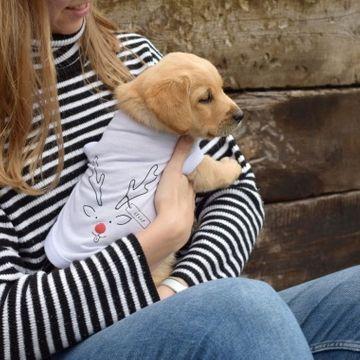 Personalised Reindeer Dog T-Shirt